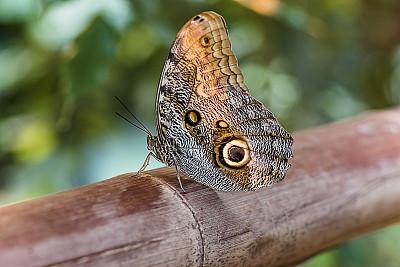 自然美,蝴蝶,森林,奥地利,枝繁叶茂,芳香疗法,户外,园艺,庭院,自然