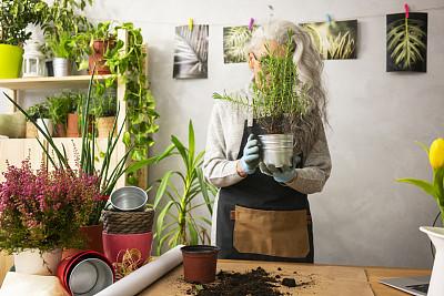 老年女人,植物群,活力,花盆,肖像,技术,植物,仅一个老年女人,园艺,仅女人