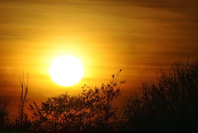黎明,山鸟类,云景,云,鸟类,树梢,动物习性,舞蹈,松树,动物交配