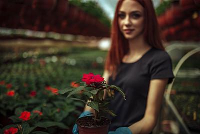 温室,女人,农业,专业人员,园艺手套,商业金融和工业,拿着,农场,植物,园艺