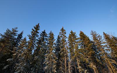 芬兰,冬天,地形,森林,风景,云景,云,黄昏,公园,云杉