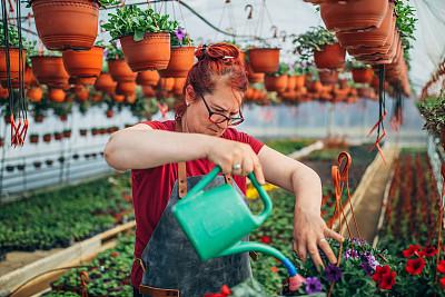 喷壶,女人,菜园,农业,专业人员,花盆,花鳞茎,商业金融和工业,农场,植物