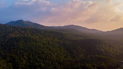 无人机,热带树,棕榈树,热带雨林,航拍视角,蕨类,山路,小树林,航空器拍摄视角,山脊