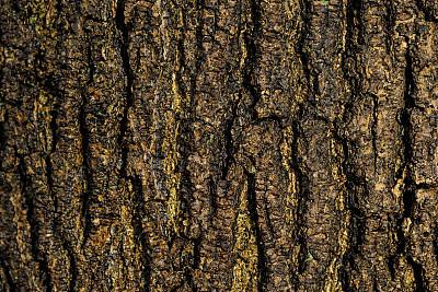 湿,暗色,湿透,树干,木制,颜色,自然,图像,英国,植物表皮