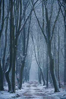 小路,大风雪,白昼,冬天,森林,山毛榉树,清新,气候,寒冷,环境