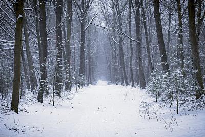 小路,松树,大风雪,白昼,冬天,森林,清新,气候,寒冷,环境