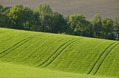 春天,田地,清新,环境,奥地利,草,自然美,轮胎印,植物,户外