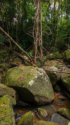 河流,沼泽,湖,石头,热带雨林,泉,小溪,湍急的,热带气候,泰国