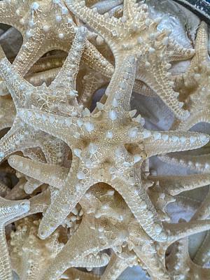海星,背景,生物学,热带气候,船,动物,装饰物,鹦鹉螺,贝壳,水生动植物