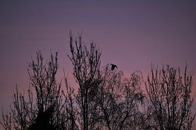 鸽子,城市生活,背景分离,云,黄昏,自然美,鸟类,春天,树梢,屋顶