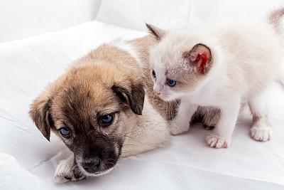 新生动物,友谊,小狗,悲哀,小猫,街道,纯种犬,背景分离,舒服,肖像