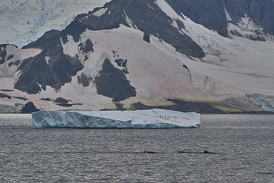 座头鲸,巴布亚企鹅,非凡的,风景,南极洲,野外动物,半岛,南冰洋,mithridates vi,气候