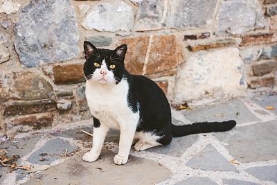 注视镜头,可爱的,流浪动物,猫