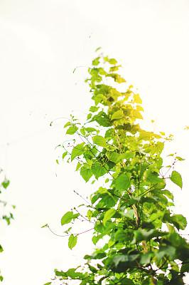 田地,绿色,在上面,跳,日落