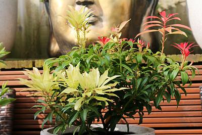 仙女座,英格兰,枝繁叶茂,花的组成部分,植物,户外,晴朗,园艺,开花植物,庭院