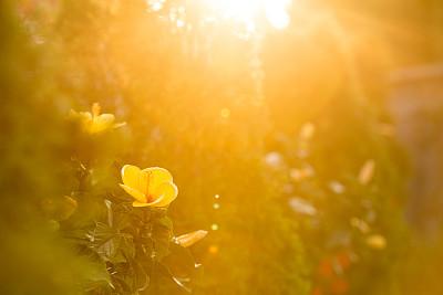 园林,日光,充满的,热,景观设计,热带气候,黄昏,郁金香,加拿大,花