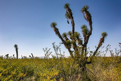 墨西哥中部,约书亚树,圣路易斯波托西,沙漠,苏格兰高地,气候,热,热带气候,中美洲部落文化,云
