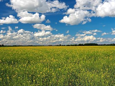 油菜花,田地,农业,有机农庄,高动态范围成像,春天,农场,菜籽油,植物,花