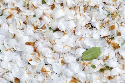 海棠,花瓣,陆地,自然,季节,清新,图像,花朵,美,野苹果树