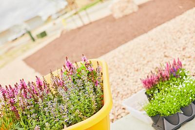 独轮手推车,植物群,未来,充满的,景观设计,简单,自然美,春天,花,植物