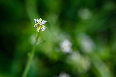 草地,春天,股票,清新,环境,草,自然美,植物,背景,夏天