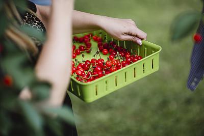 篮子,樱桃,拿着,青年人,农业,周末活动,部分,清新,食品,熟的