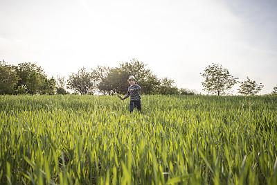 童年,农业,自由,云,狗,草,自然美,春天,4岁到5岁,农场