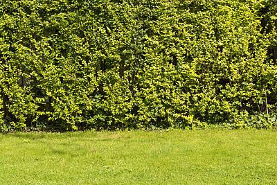 菜园,农业,状态良好,纹理效果,凉棚,华贵,树木造型,枝繁叶茂,草,色彩鲜艳