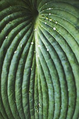 叶子,式样,绿色,对称,边框,简单,枝繁叶茂,植物,户外,分形