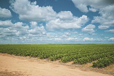地平线,草莓,农业,云,环境保护,春天,农场,植物,水果,夏天