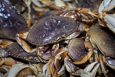 海上运输,动物,丹金尼斯螃蟹,活力,清新,渔业,海洋生命,食品,加利福尼亚,堆