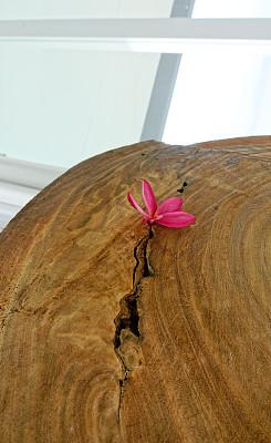 粉色,木制,桌子,赤素馨花,室内,极简构图,玻璃,纹理效果,一个物体,游出水面