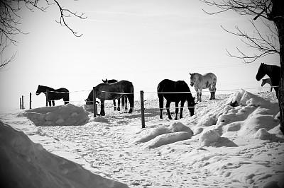 马,冬天,风景,21世纪,黑色,雪,非都市风光,季节,户外,动物