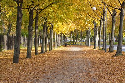 秋天,林荫路,哥德堡,欧洲,成一排,黄色,瑞典,图像,橙色,无人