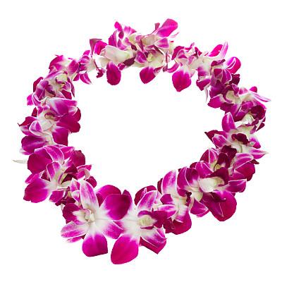 紫色,白色背景,白色,在上面,花环,特写,夏威夷,热带气候