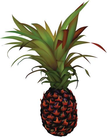菠萝,食品,水果,热带水果,背景分离,绘画插图,无人,矢量,图像