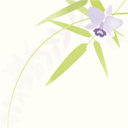 白色背景,紫色,兰花,竹,背景分离,竹子叶,设计元素,矢量,背景,柔和色