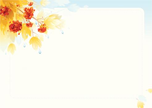 叶子,秋天,浆果,背景,雨滴,箭木,花楸浆果,白色背景,节日,季节