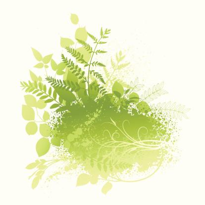自然,摇滚乐,纹理效果,有蔓植物,植物茎,枝,叶子,春天,秋天,生长