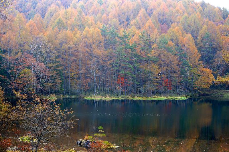 池塘,秋天,叶子,十月,清新,橙色,枝繁叶茂,色彩鲜艳,自然美,枫叶
