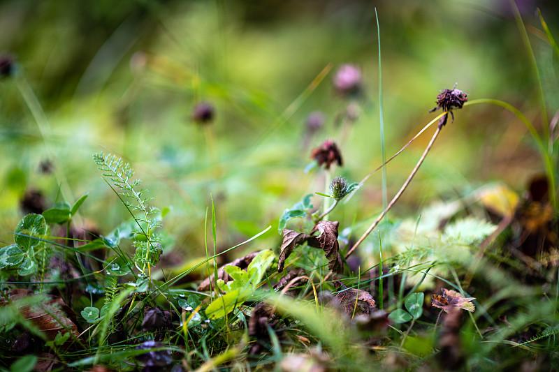 秋天,阿尔卑斯山脉,背景,植物群,草坪,草,刀刃草,植物,鲜绿色,草地