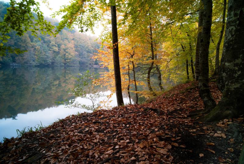 秋天,森林,早晨,风景,环境保护,户外,黄色,日光,背景,叶子
