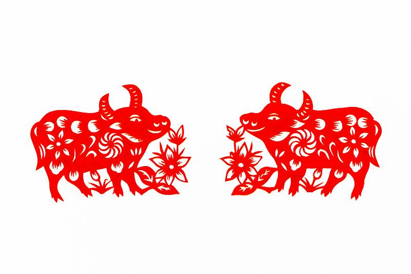 动物,传统,春节,牛年,母牛,式样,切断