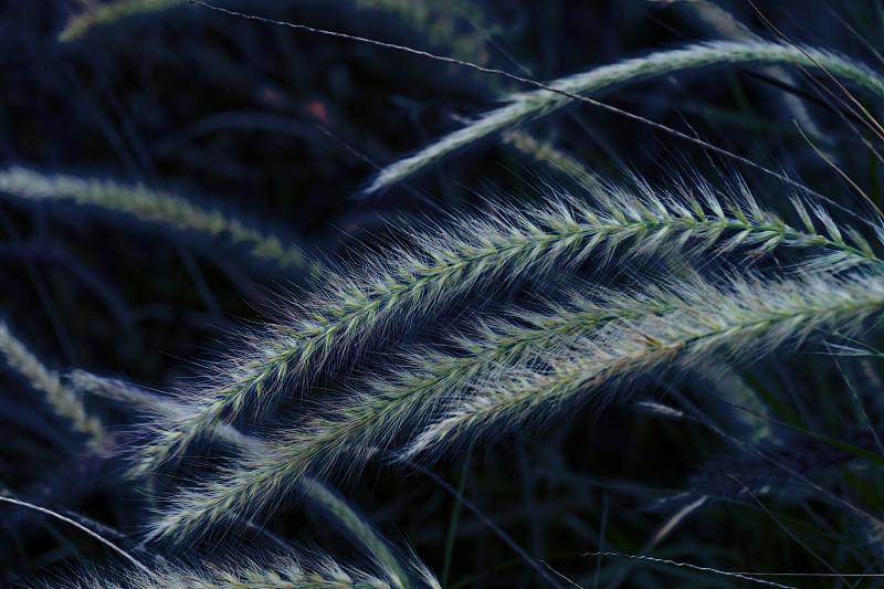 2020,草,田地,彩色图片,自然美,简单,蓝色背景,蓝图,刀刃,熟的