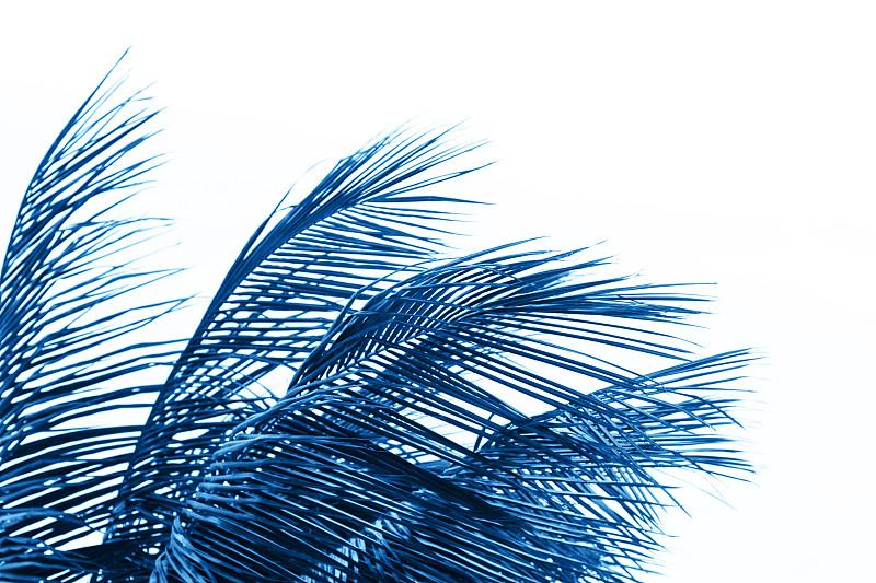 白色背景,棕榈叶,看风景,分离着色,2020,背景分离,边框,热带气候,蓝图,椰子