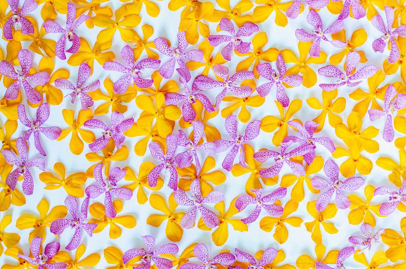 黄色,兰花,粉色,彩色图片,穿衣服,周年纪念,事件,清新,浪漫,泰国