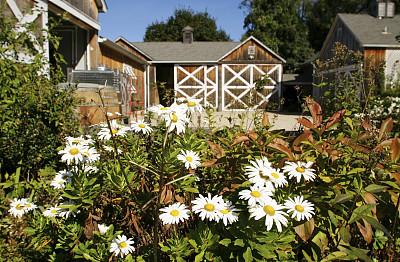 仅一朵花,雏菊,长岛,葡萄酒厂,水平画幅,木制,无人,户外,春天