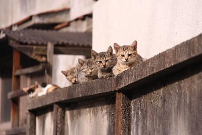 野生猫科动物,东京,上野公园,上野区,屋檐,野猫,茅屋屋顶,水平画幅,墙