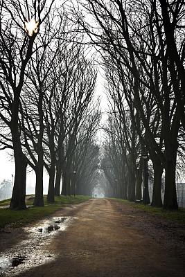 早晨,雾,乡村路,费拉拉,绿化隔离带,垂直画幅,高视角,林区,湿,户外