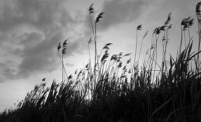 风,草,滨草,草原,水平画幅,无人,运动模糊,黄昏,户外,太阳